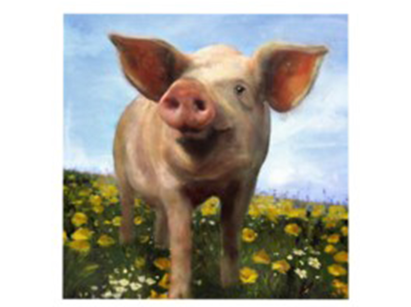 "Pig Handpainted Canvas 40""W x 40""H"
