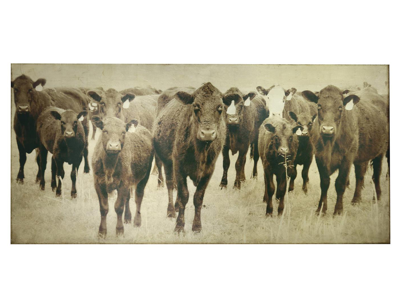 "Sepia and Gold Leaf Cows Canvas Art 76""W x 36""H"