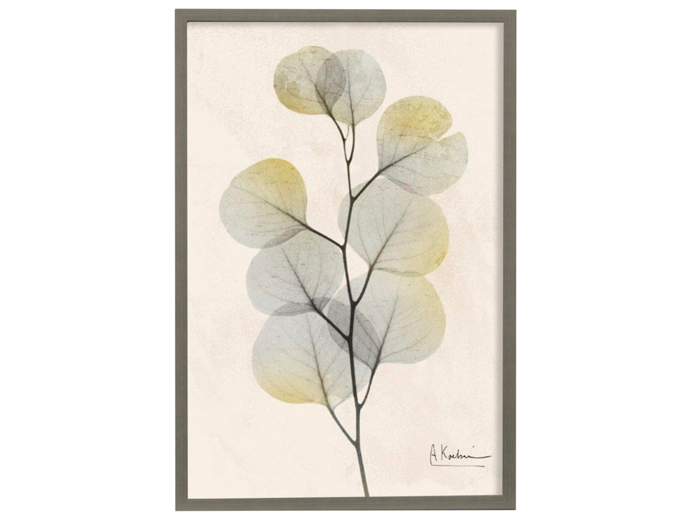 "Eucalyptus Framed Print Under Glass 26""W x 38""H"