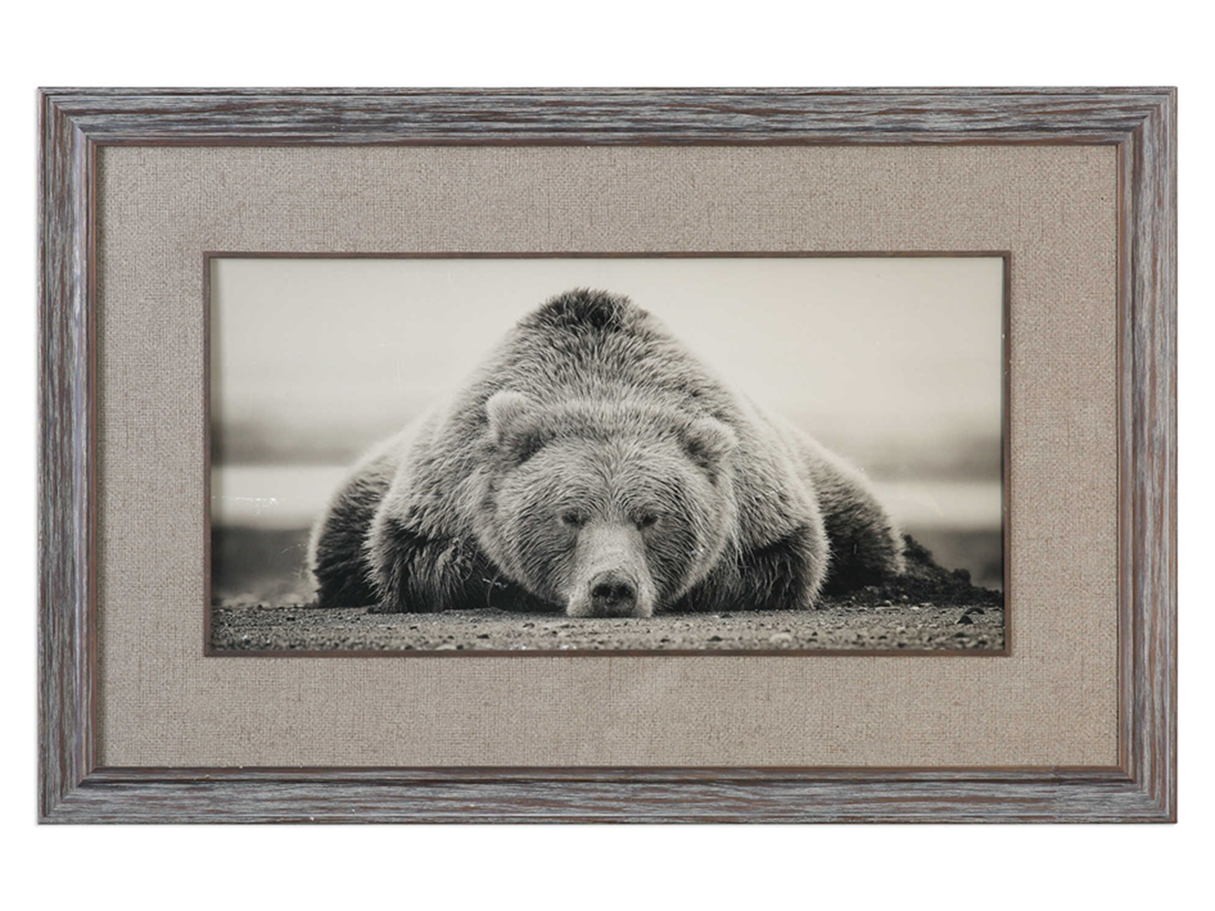 "Sepia Sleeping Bear Framed Print 50""W x 32""H"
