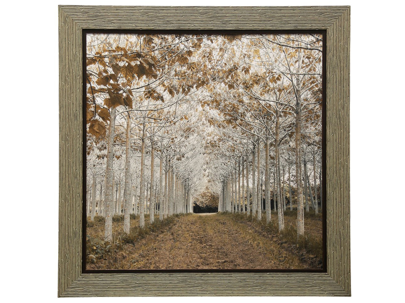 "White/Gold Trees Framed Print 49""W x 49""H"