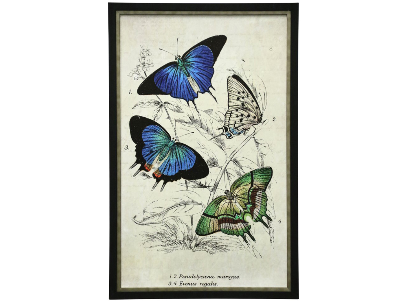 "Butterflies I Framed Print Under Glass 25""W x 39""H"