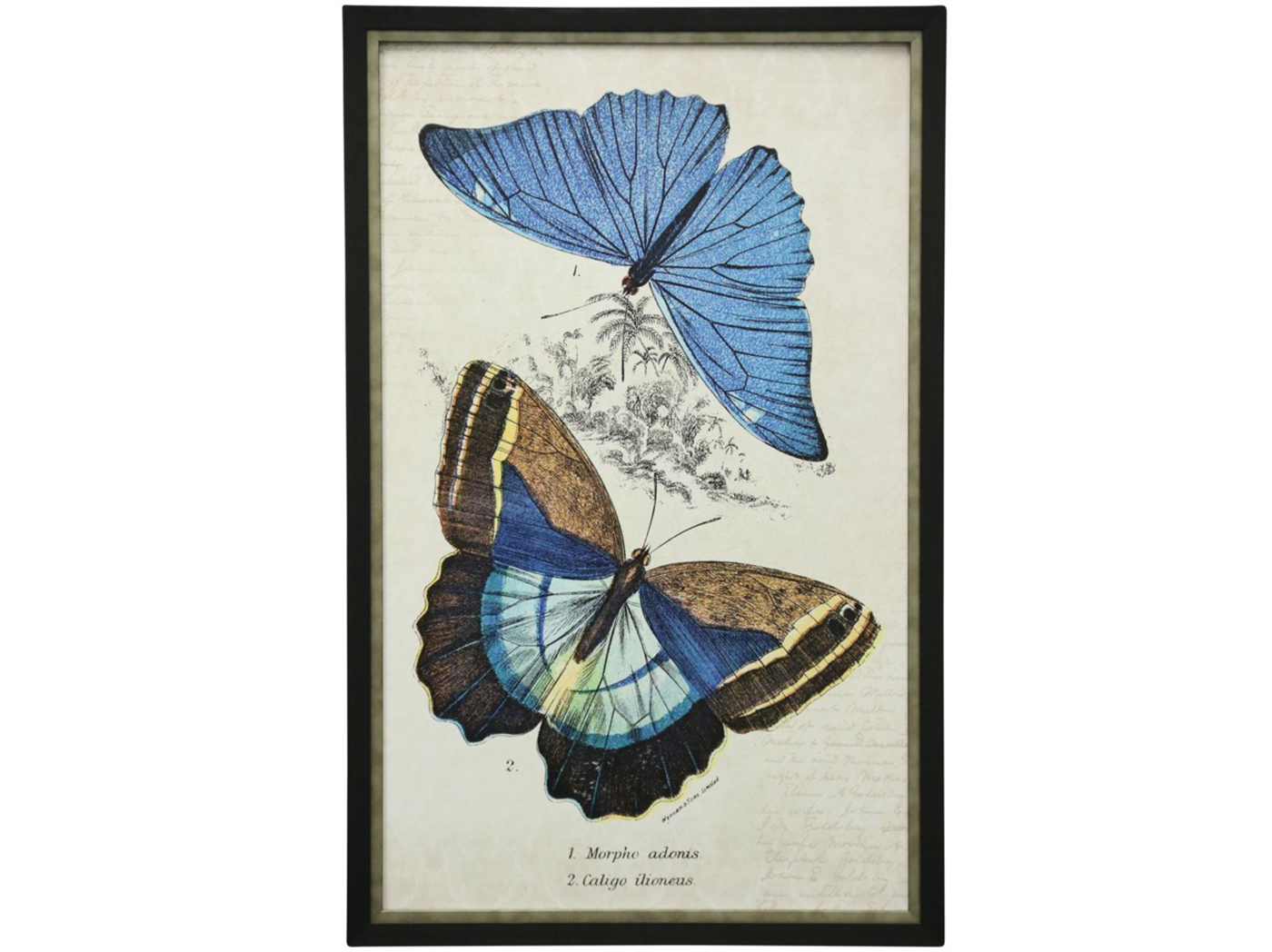 "Butterflies II Framed Print Under Glass 25""W x 39""H"