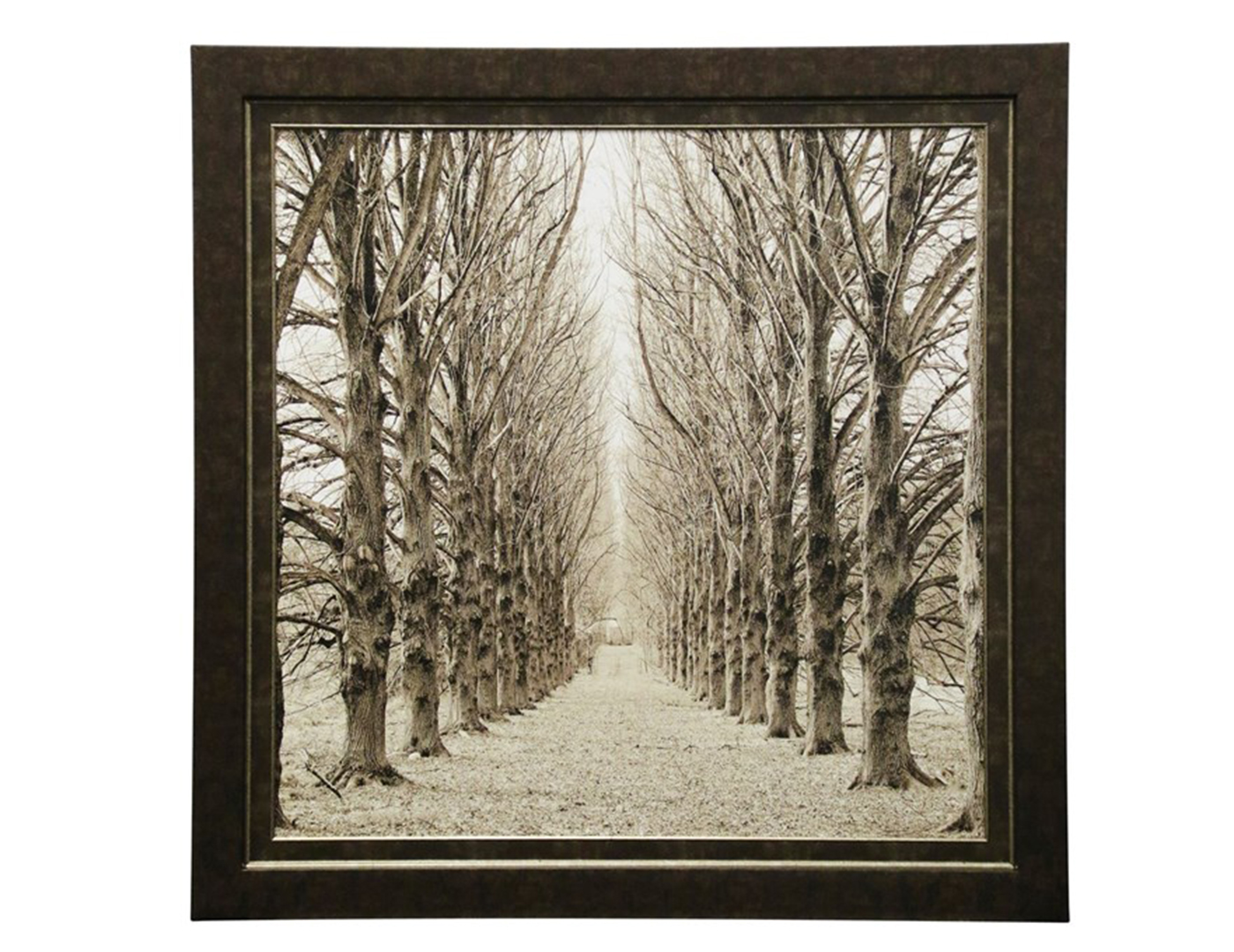 Sepia Winter Tree Path Framed Print