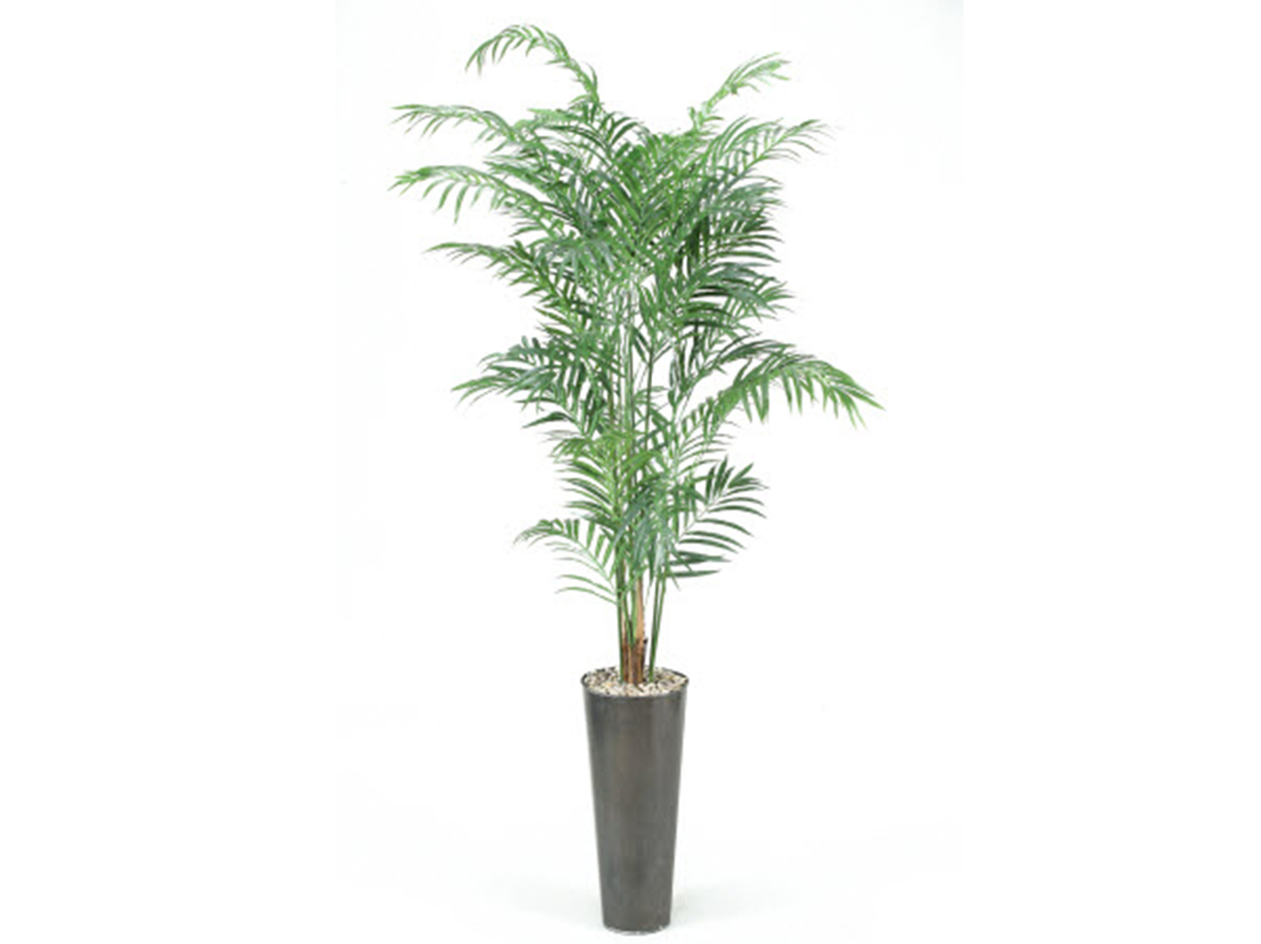 "Areca Palm in Planter 84""H"