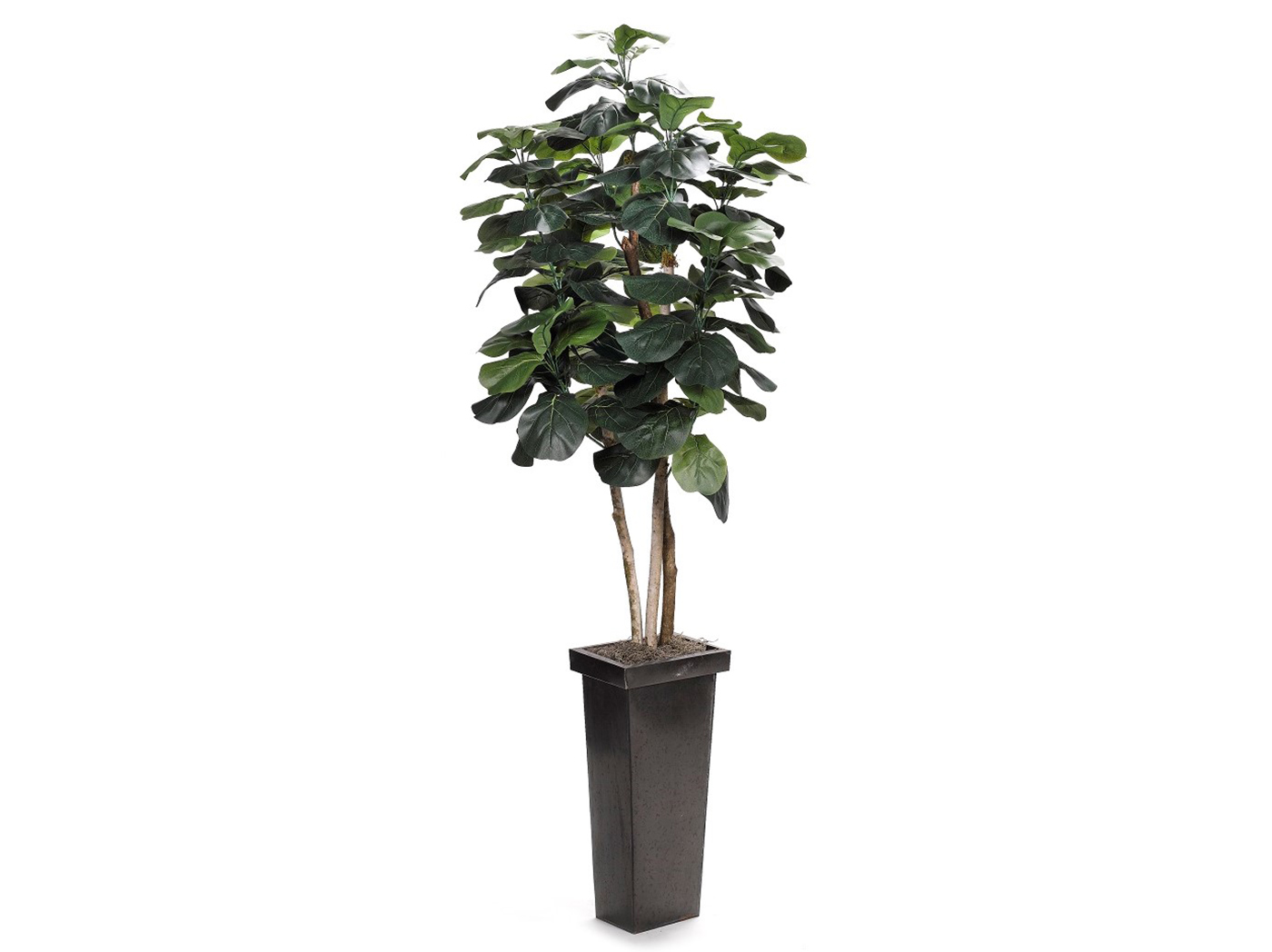 Fiddle Leaf Fig Tree In Square Metal Planter 8'H