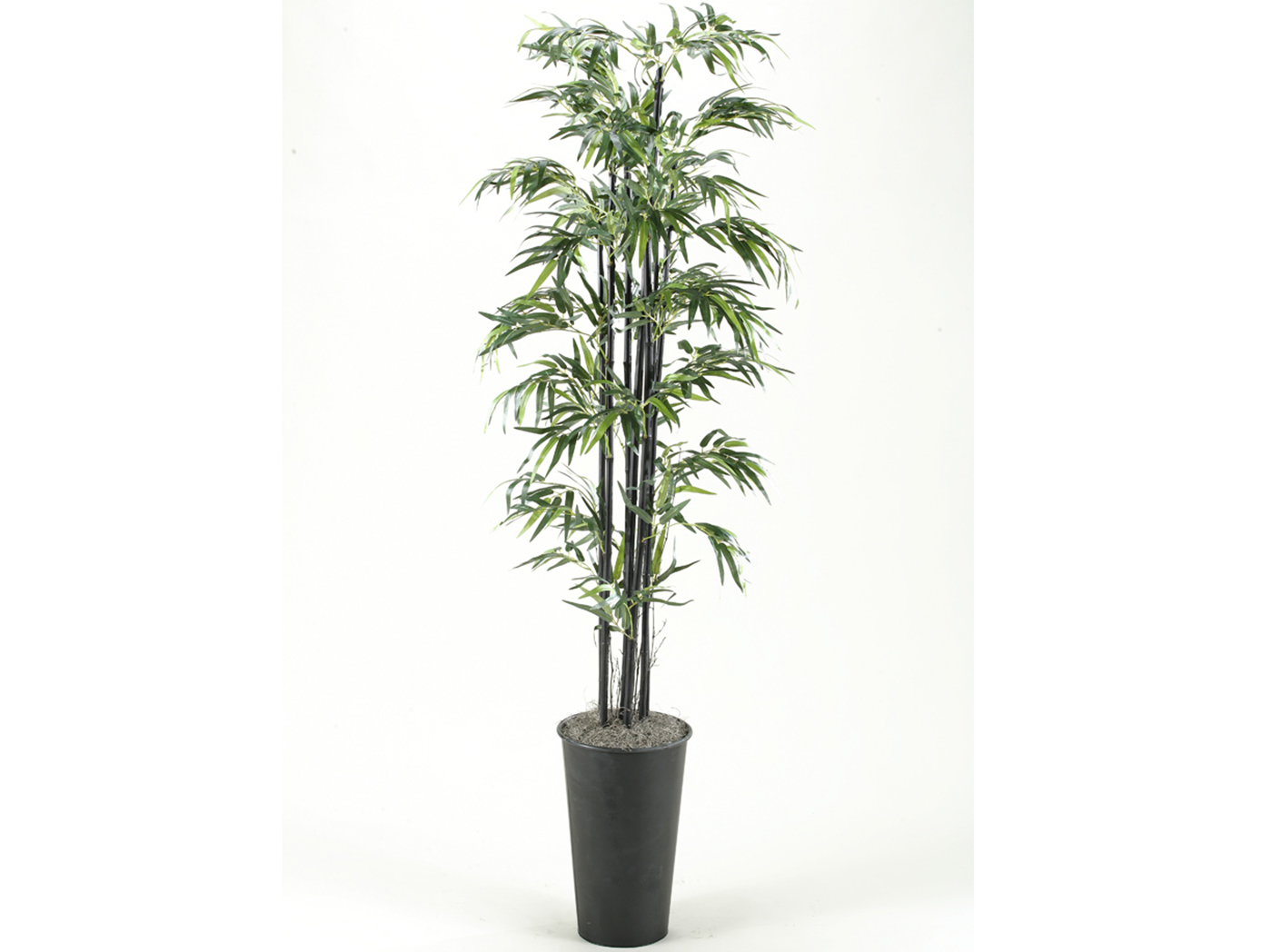 "Black Bamboo Tree 84""H"