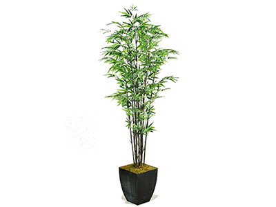 Black Bamboo Tree 6'