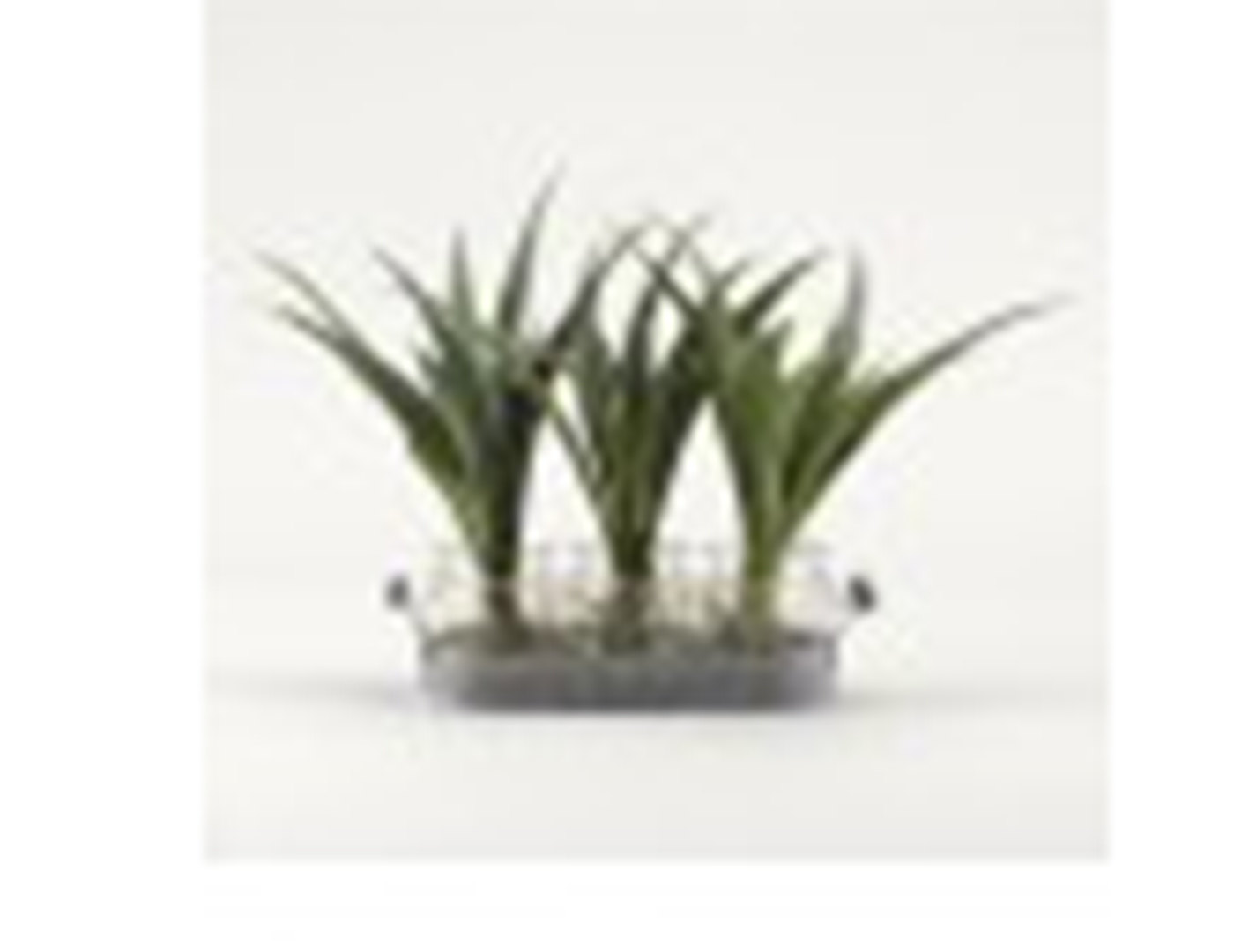"Lily Grass in 3 Glass Jars and Metal Tray 18""W x 12.5""H"