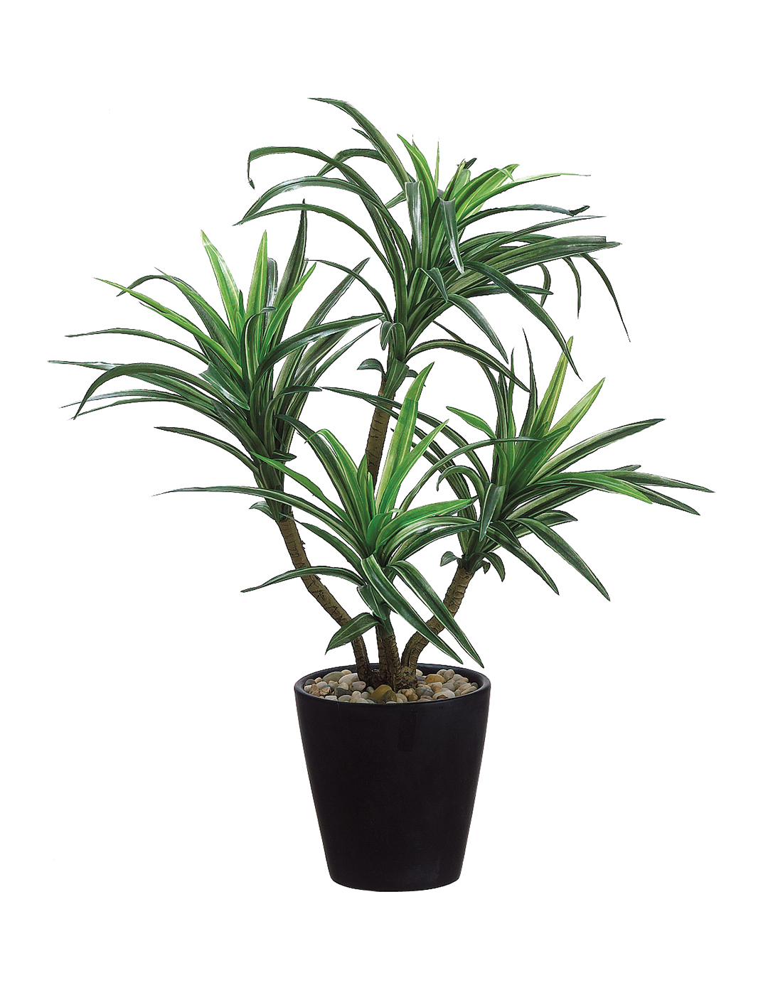"Dracaena Plant in Pot 20""H"