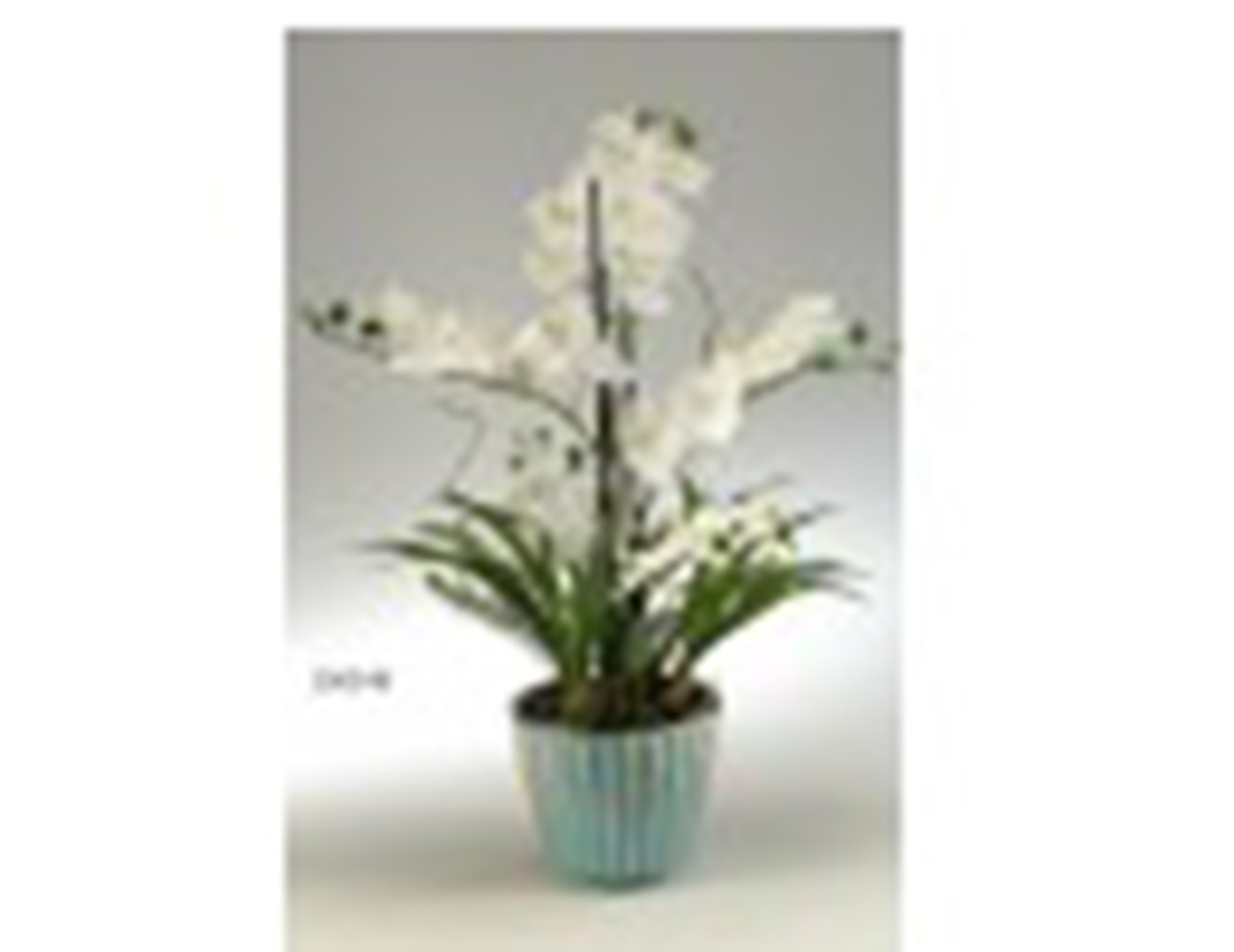 Cream Orchids in Round Ceramic Planter