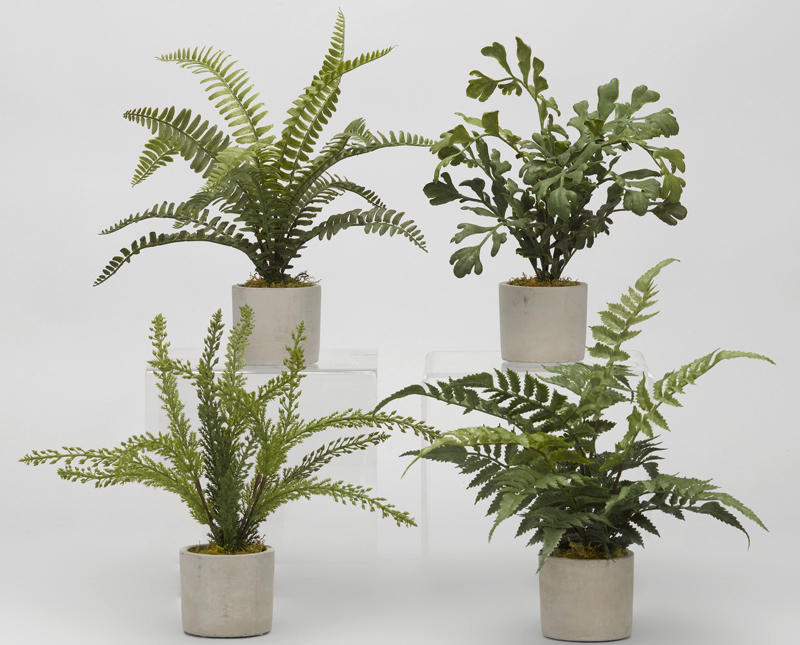 "Assorted Mini Fern 13.5""W x 14""H"