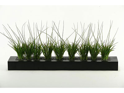 Grasses in Tray 36X16""