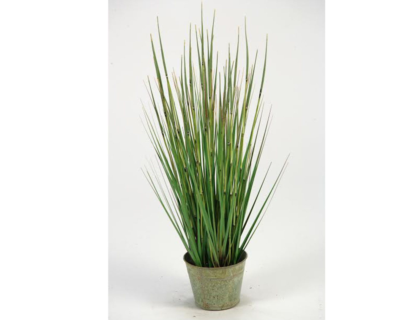 Small Onion Grass in Planter 31""