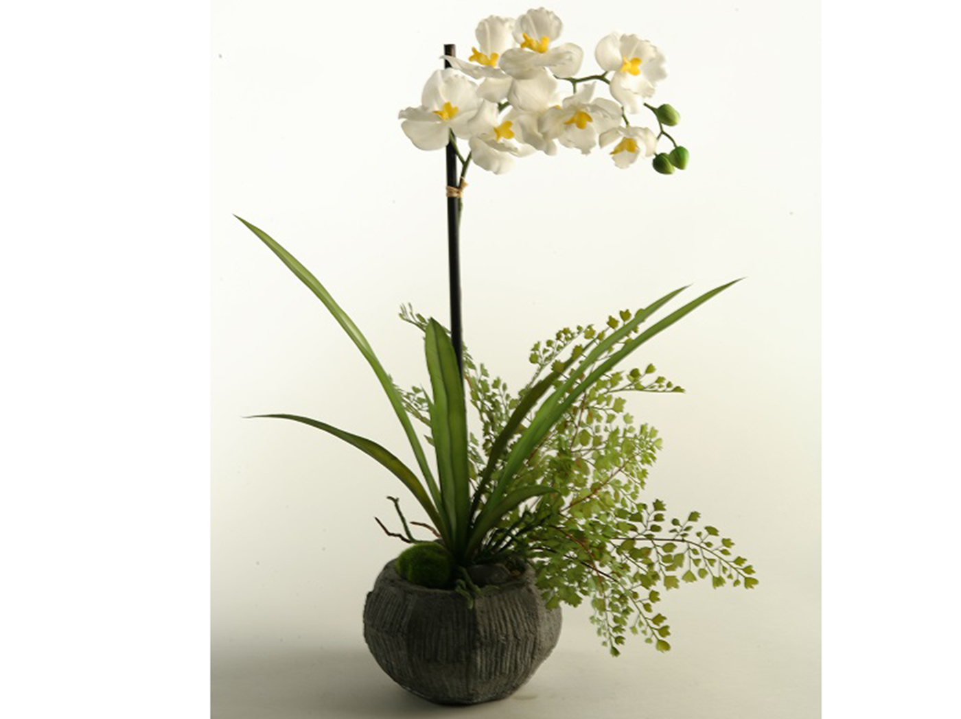 "Cream Vanda Orchids in Concrete Bowl 16""W x 25""H"