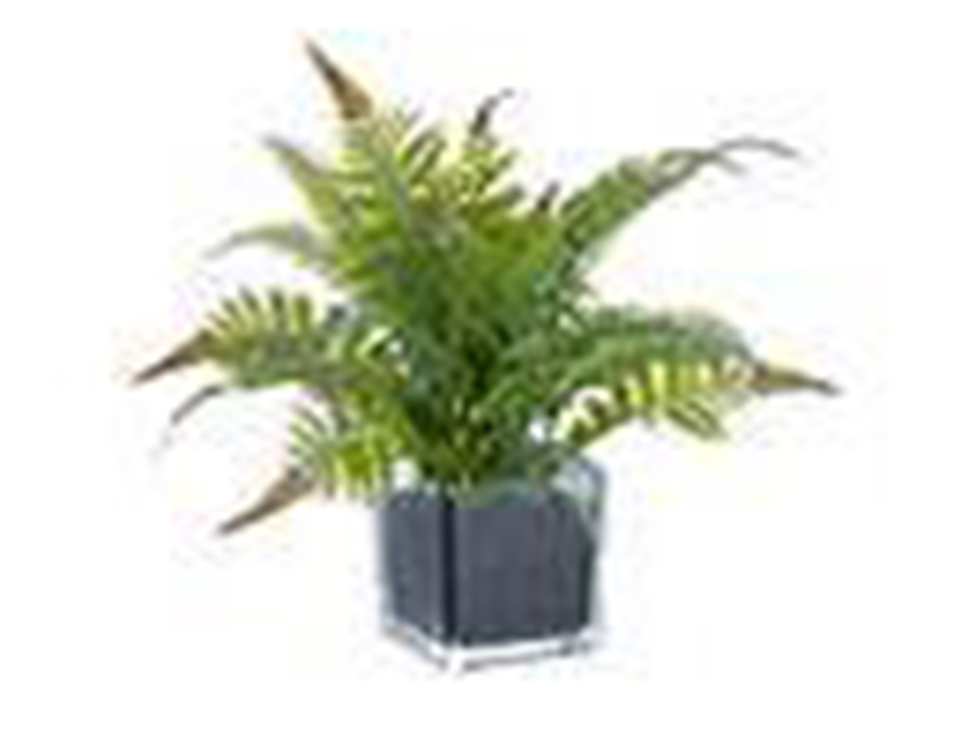 "Green Mixed Fern In Square Glass Vase 12""H"