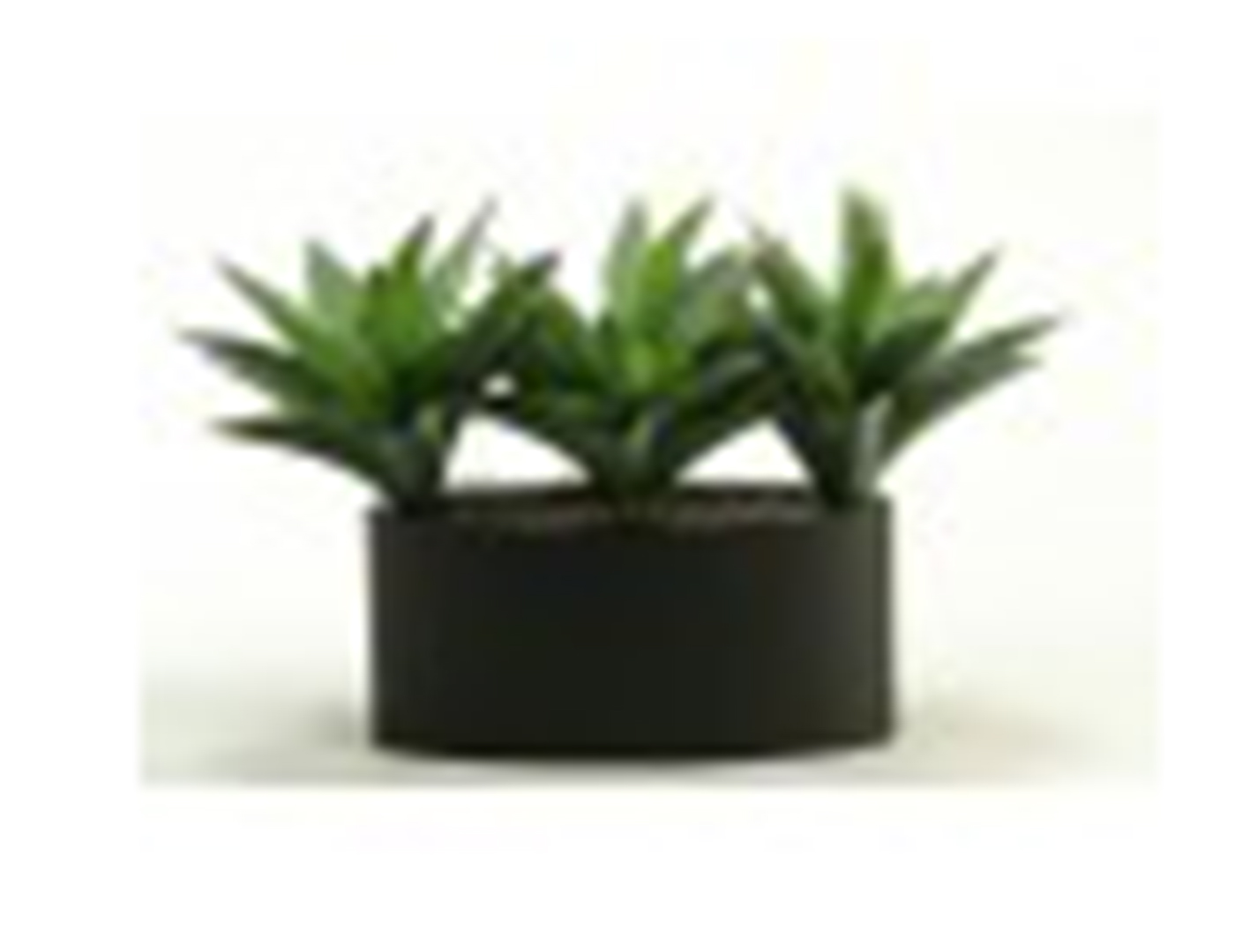 "Aloe Plants in Oval Metal Planter 20""W x 13""H"