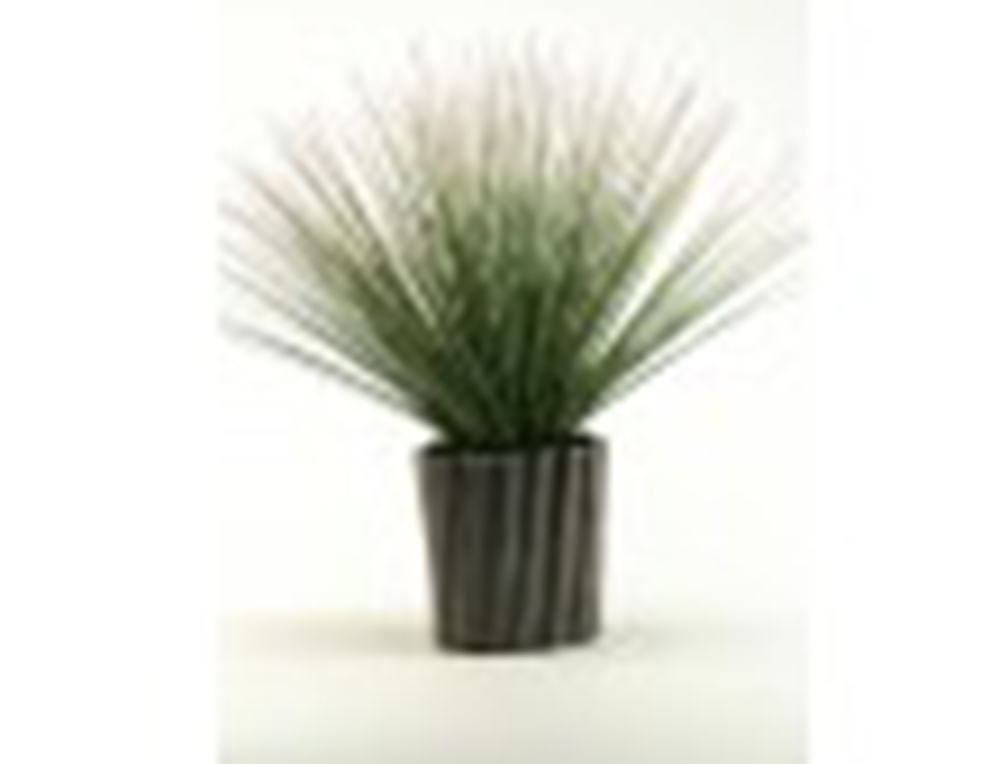 "Onion Grass in Ceramic Planter 12""W x 22""H"