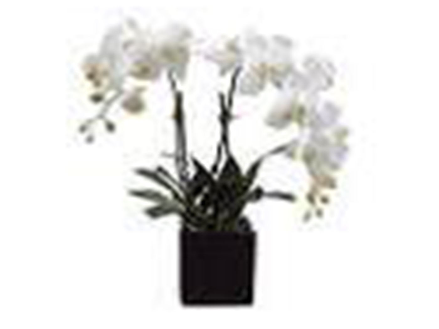 "White and Yellow Orchids in Black Square Ceramic Vase 22""H"
