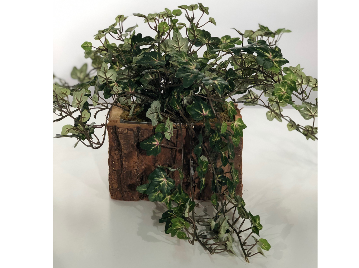 Mini Ivy In Tree Trunk Planter