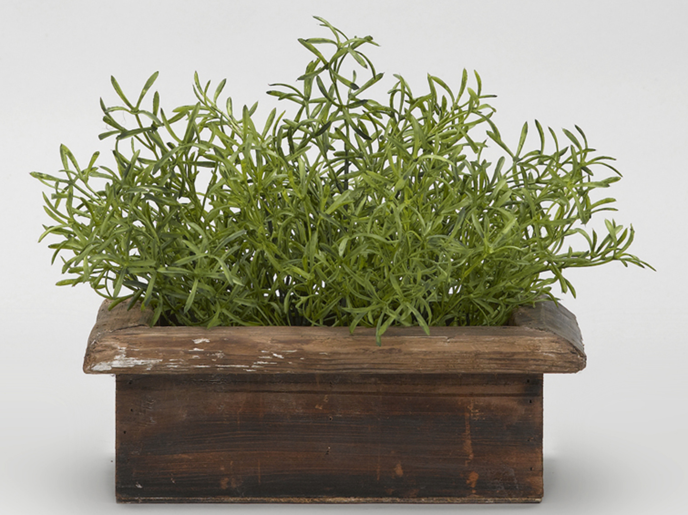 "Wild Asparagus in Rectangular Wood Planter Box 14""W x 11.5""H"