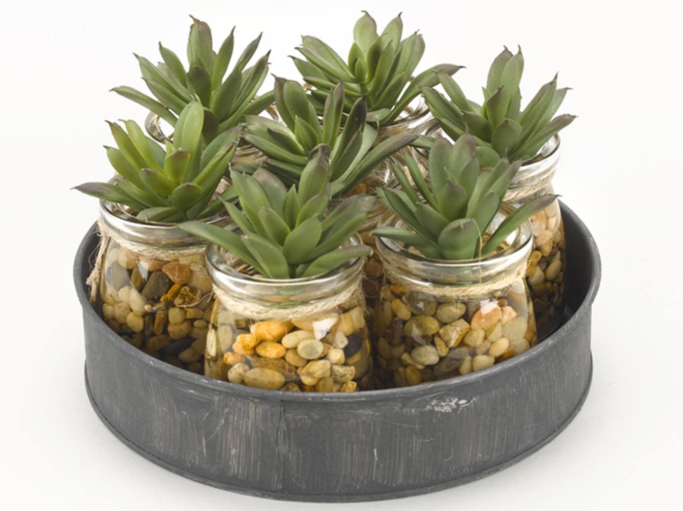 "Mini Aloe Plants in Glass Jars on Metal Tray 8""W x 4.5""H"