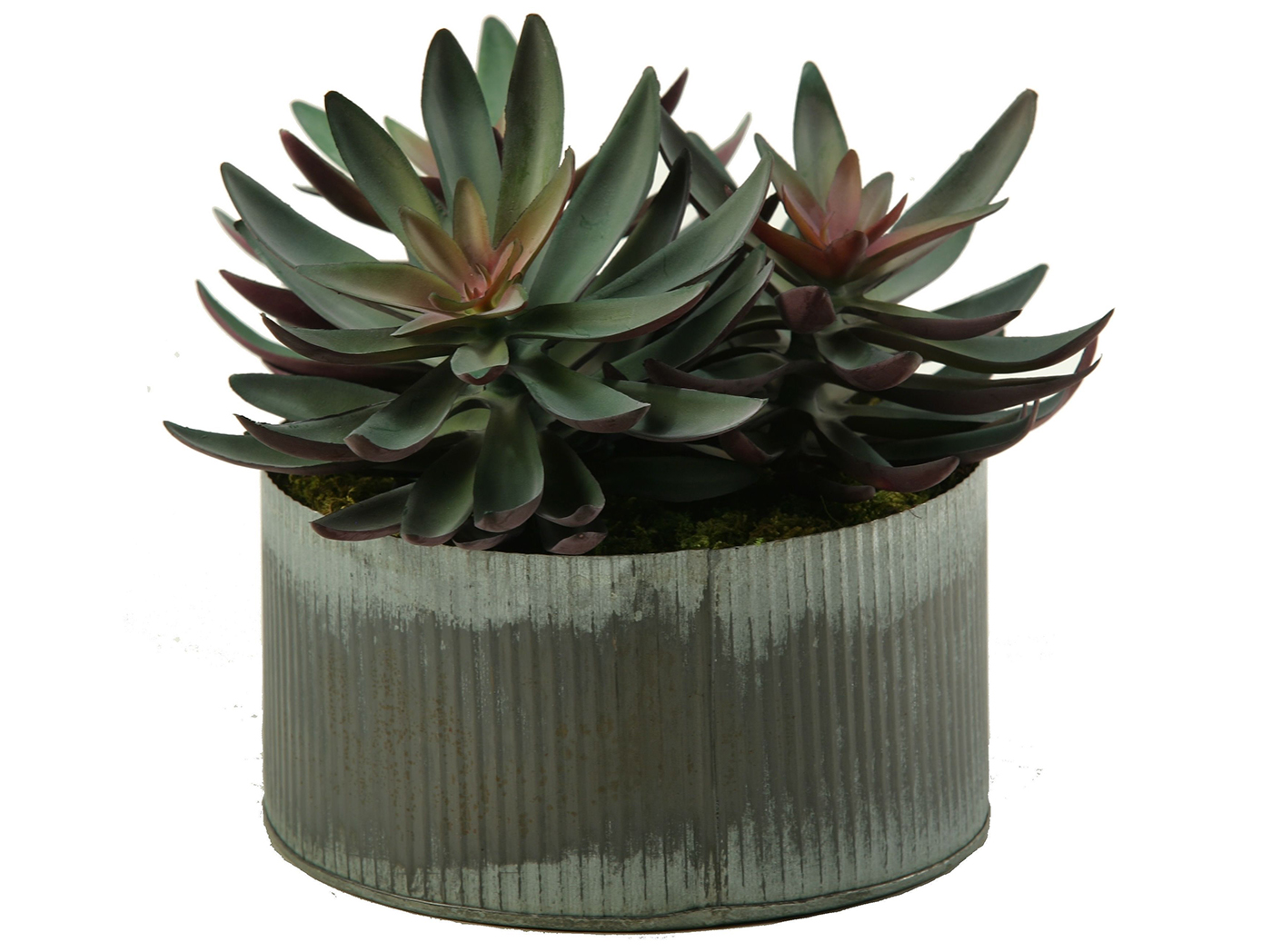 "Frosted Echeveria in Tin Planter 7""W x 10""H"