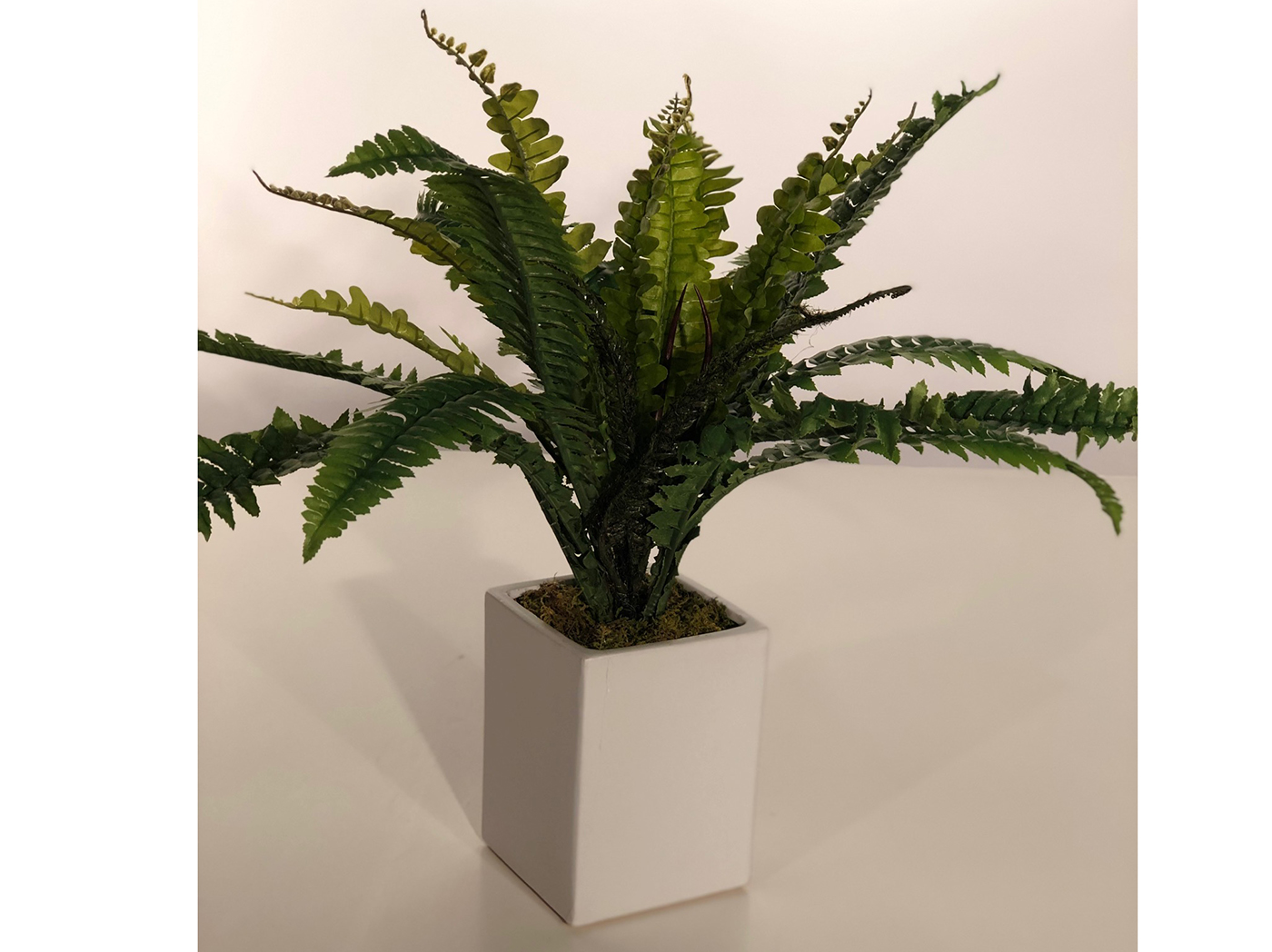 Fern In White Square Ceramic Planter