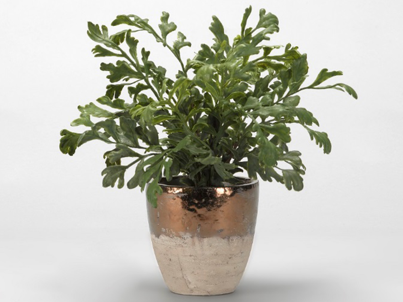 "Hare's Foot Fern in Ceramic Planter 17""W x 15""H"