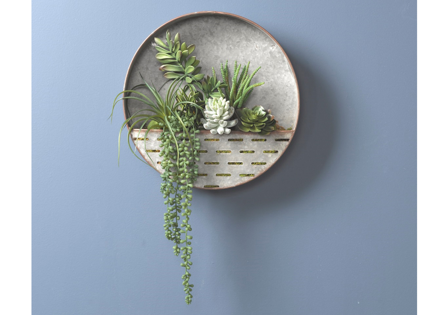 Assorted Succulents in Round Wall Sconce 16""