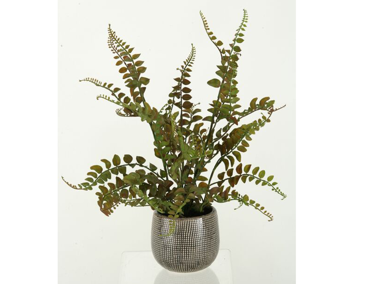 Fern in Ceramic Planter 18""