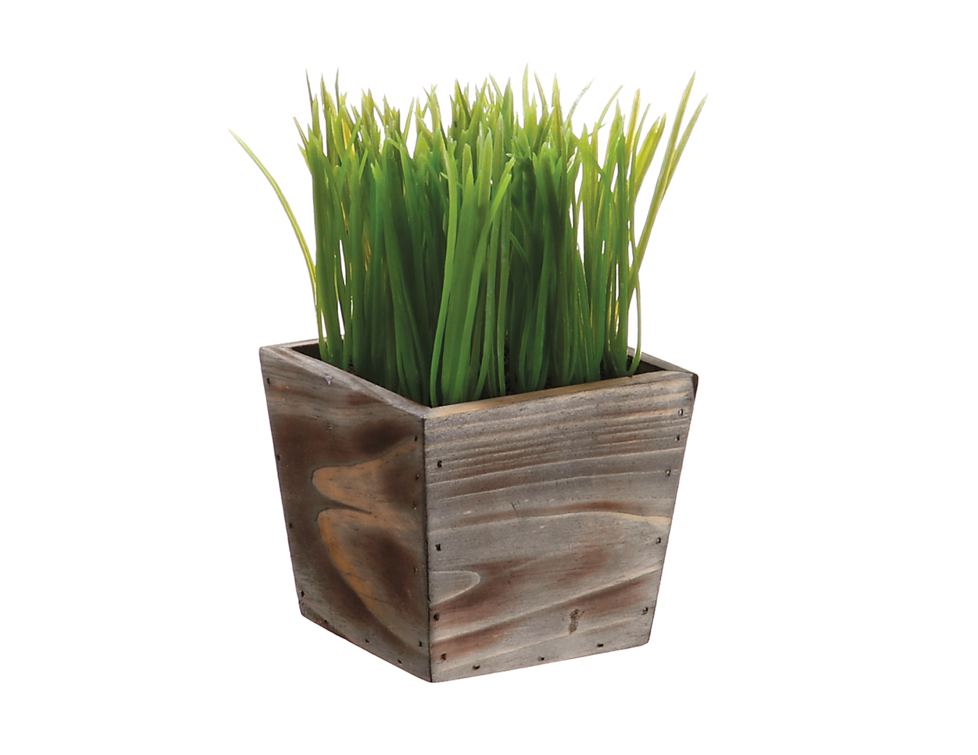 "Grass in Wood Planter 8""X4.5"""