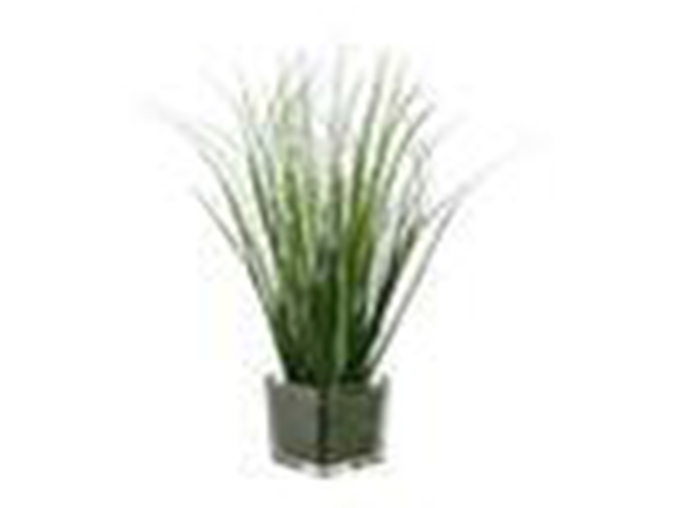 "Grass In Square Glass Vase 15""H"