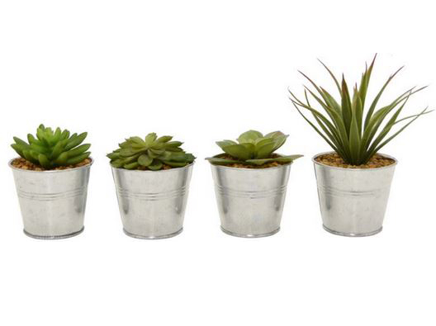 "Assorted Succulent in Galvanized Pot 3""W x 7""H"