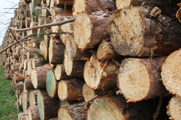 LOGS CLOSEUP