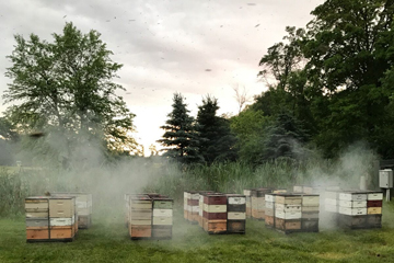 BEES PIC 3