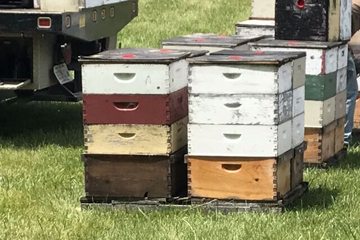 BEES PIC 2